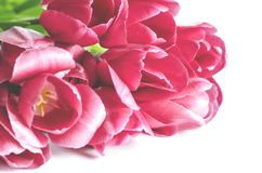 Bouquet of pink tulips on a light background. Holiday card royalty free stock image
