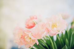 Bouquet of pink tulips on light background. spring background Royalty Free Stock Photography