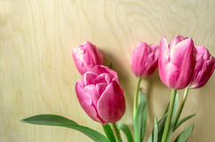 Bouquet of pink tulips on of light plywood Royalty Free Stock Photos