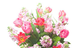 Bouquet of pink tulips with Matthiola incana Royalty Free Stock Images