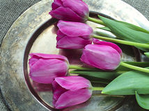 Bouquet of pink tulips. On metal tray background stock photo