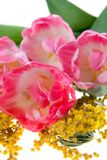 Bouquet of pink tulips and mimosa Royalty Free Stock Photos