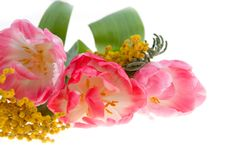 Bouquet of pink tulips and mimosa Royalty Free Stock Photo