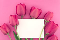 Bouquet of pink tulips on pink background with empty card Royalty Free Stock Images