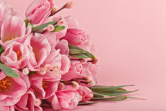 Bouquet of pink tulips on pink background stock photography