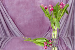 Bouquet of Pink Tulips - Pink Drapery Royalty Free Stock Images