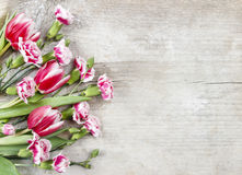 Bouquet of pink tulips and red carnations Stock Photography