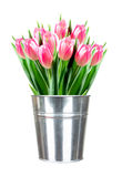 Bouquet of pink tulips in small metal bucket isolated on white Royalty Free Stock Photography