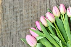 Bouquet of pink tulips. Top view of a bouquet of pink tulips on a wooden background Royalty Free Stock Photos