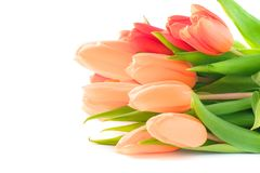 Bouquet of pink tulips for Valentine`s or Mother`s Day. Isolated stock images