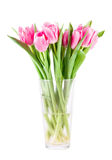 Bouquet of pink tulips in vase. Isolated over white background Royalty Free Stock Photography