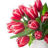 Bouquet of pink tulips in vase on the white background Stock Photos