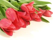 Bouquet of tulips, close up stock photos