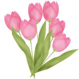 Bouquet of pink tulips on white Royalty Free Stock Images