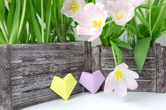 A bouquet of pink tulips in a wooden box and two paper hearts of yellow and lilac color on a white background.  stock image