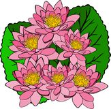 Bouquet of pink water lilies and green leaves Stock Photo