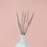Bouquet of pink wheat spikelets in white vase. On a pale pink pastel background Stock Photo