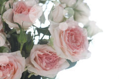 Bouquet of pink and white flowers Royalty Free Stock Photo