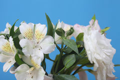 Bouquet of pink and white flowers Stock Photography