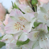 Bouquet of pink and white flowers royalty free stock photography