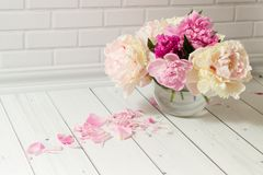 Bouquet of pink and white peonies in vase Stock Image