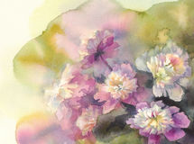 Bouquet of pink and white peonies watercolor Royalty Free Stock Photos