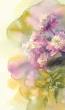 Bouquet of pink and white peonies watercolor Royalty Free Stock Photo