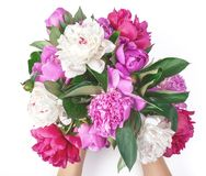Bouquet of pink and white peony flowers in woman`s hand isolated on white background. Flat lay. Bouquet of pink and white peony flowers in woman`s hand isolated stock image