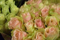 Bouquet of pink and white roses. Beautiful flowers Stock Photography