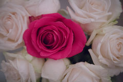 Bouquet pink white roses closeup Stock Image