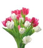Bouquet of pink and white tulips isolated on white. Background Stock Image