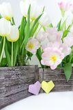 A bouquet of pink and white tulips in a wooden box and a paper hearts of yellow and lilac color on a white background.  royalty free stock photography