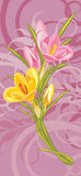 Bouquet of pink and yellow crocuses Stock Photos