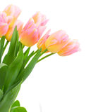 Bouquet of pink and yellow  tulip flowers Stock Image