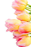 Bouquet of pink and yellow  tulip flowers Stock Images
