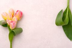 A bouquet of pink and yellow tulips on a background with copy space