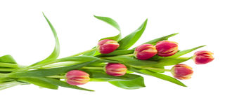 Bouquet of pink and yellow tulips on white Stock Photography