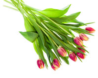 Bouquet of pink and yellow tulips on white Royalty Free Stock Images