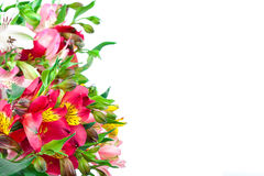 Bouquet of pink, yellow and white lilies. Royalty Free Stock Photos