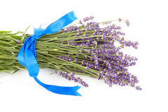 Bouquet of plucket lavender Royalty Free Stock Photos