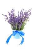 Bouquet of plucket lavender Royalty Free Stock Photo