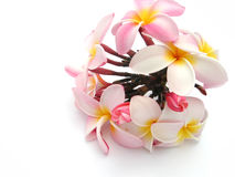 Bouquet of Plumeria flowers. Colorful pink bunch or bouquet of blooming Plumeria flowers isolated on white background Royalty Free Stock Photo
