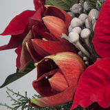 Bouquet of poinsettia flower Stock Images