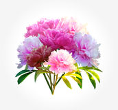 Bouquet polygonal peony flower with leaves on whie.  Stock Photos