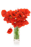 Bouquet of poppies Stock Images