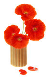 Bouquet of poppies in the bamboo glass Royalty Free Stock Image