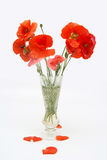 Bouquet of poppies in a crystal vase. On the white background Stock Image