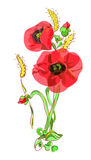 Bouquet with poppies and ears. Illustration on white background Stock Photos