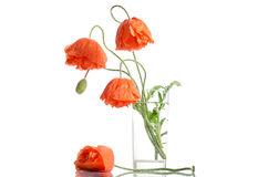 Bouquet of poppies in glass vase Stock Photo