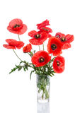 Bouquet of poppies in glass vase Royalty Free Stock Photos